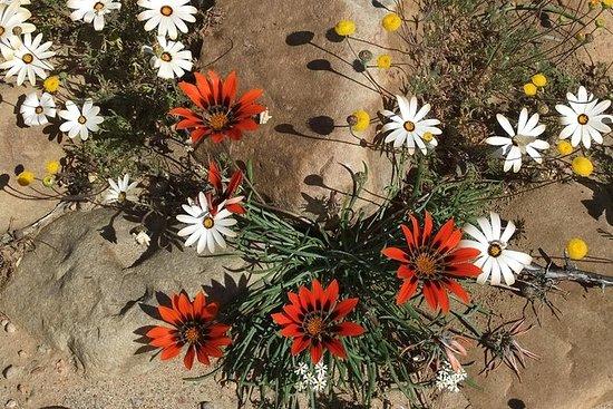 Tour dei fiori selvaggi del Western