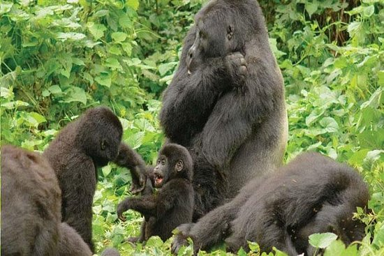6 Days Wildlife and Gorillas in Uganda