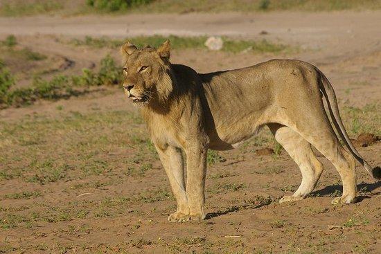 Chobe National Park Full dag Big 5...