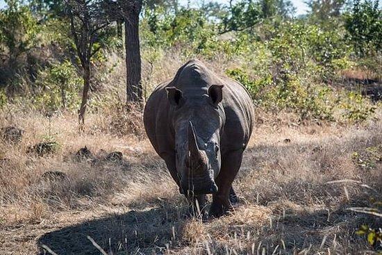 Pirschfahrt und Rhino Walk