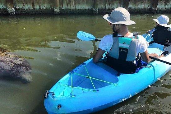 Tour in kayak di lamantini, delfini e