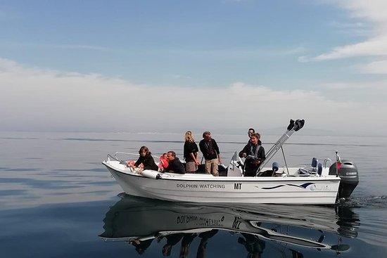 Faro: observación de delfines y vida...
