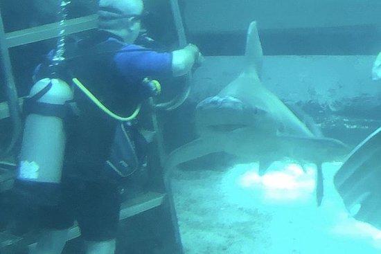 Oahu Private Shark Encounter Adventure ...