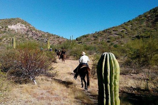 Baja Desert Horseback Riding Tour