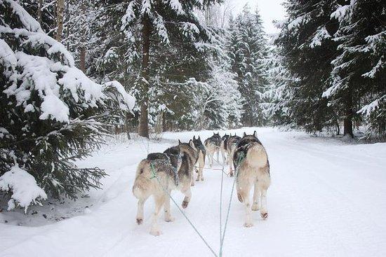Husky Dog Sledding Tour fra Riga
