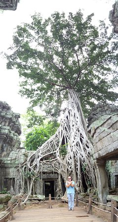 Ultimate Private Angkor Guide To Sunrise Angkor Wat, Bayon, TaProhm, Bantey Srei: Famous Tomb Raider movie location  in temple Ta Prohm....Very mystic!!!