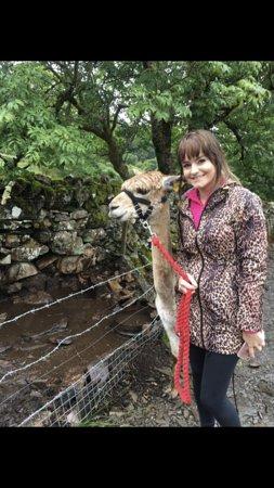 Gellilydan, UK: My daughter walking on of the alpacas 