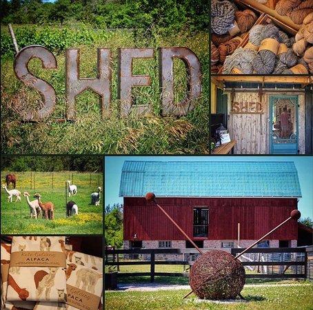 Shed Chetwyn Farms