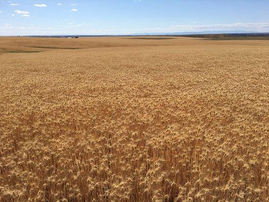 Almira, WA: 見渡す限りの小麦地帯。地平線まで続く直線道路。 クーリーダムからまっすぐ南下するとこのような景色が一面に広がっています。