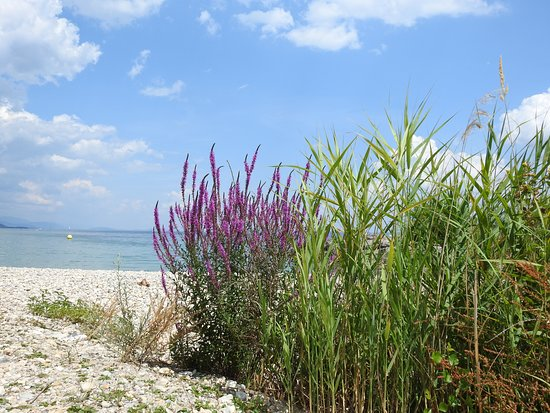 Vaumarcus, สวิตเซอร์แลนด์: Petite plage sympa vers le port