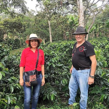 Pinchote, Колумбия: Cafetal en produccion
