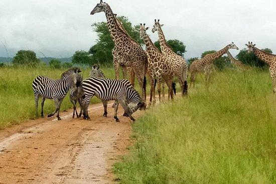 Souvenir Tanzania Safaris