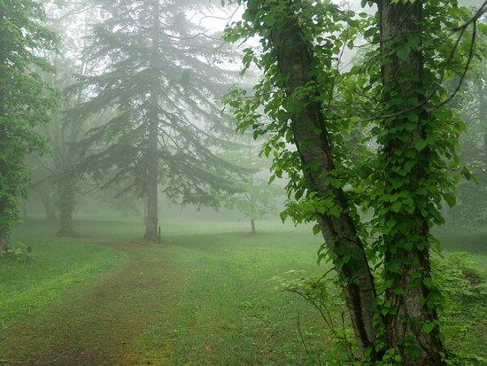支笏湖 野鳥の森