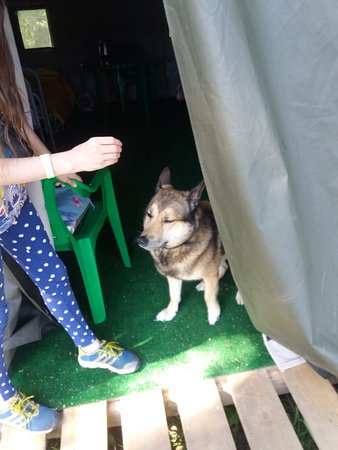 Kostroma Oblast, Venäjä: И собакам хорошо!! https://xn--80aaabcs3bj1aboq6d9c5c.xn--p1ai/
