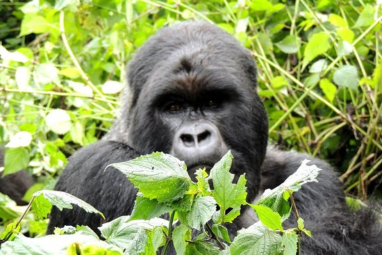 Silverback Expeditions