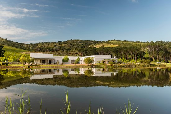 Morgenster Wine Farm and Olive Estate