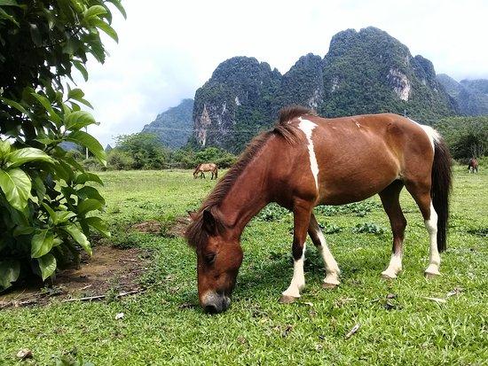 Ponies of Vang Vieng