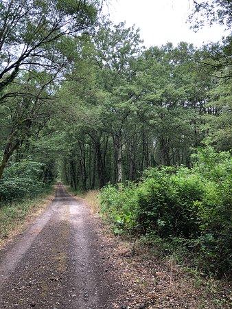 Riserva Naturale Regionale Selva del Lamone: Sentiero dei briganti