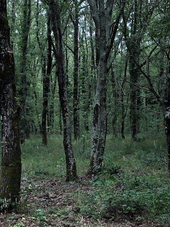 Riserva Naturale Regionale Selva del Lamone: Selva