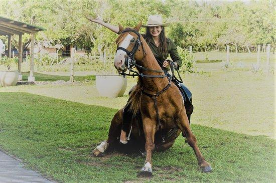 Casanare Department, Colombie : Club equino, doma de caballos, show equino, cabalgatas, trabajo de llano. Espectacular!