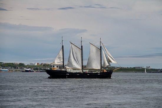 Gray Line Halifax