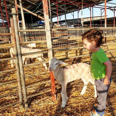 Neot Golan: פרהדיר. מקום חדש בגולן למשפחות, לצעירים ומבוגרים בכל הגילאים. שילוב של חקלאות עתיקה עם תיירות חדשנית. בואו לסייר ולטעום מהחוויות והמטעמים שלנו.