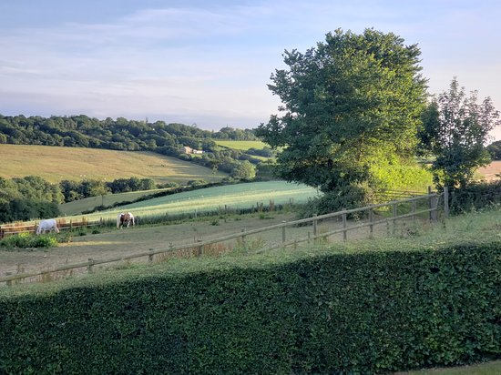 Kings Nympton, UK: View from Pond Cottage