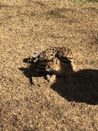 Emdoneni Cheetah project (Hluhluwe Game Reserve) - 2019 All