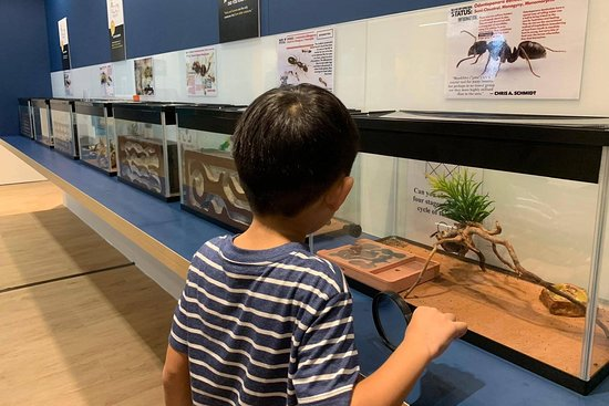 The Singapore Ants Exhibition