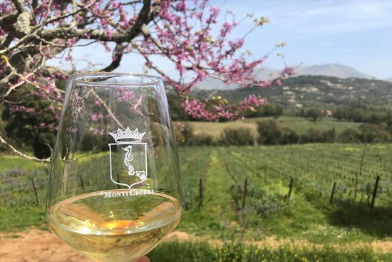 Amyclae Experience - Wine Tour