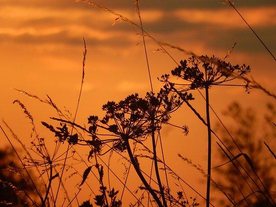 Tauves, فرنسا: coucher de soleil depuis le jardin