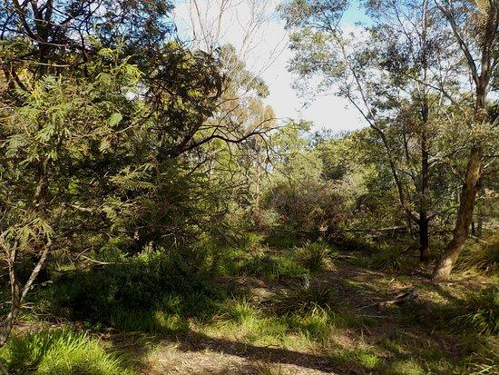 Bradshaw Bushland Resereve