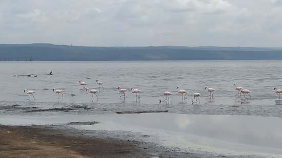 Valokuva: Full-Day Lake Nakuru National Park Private Tour from Nairobi