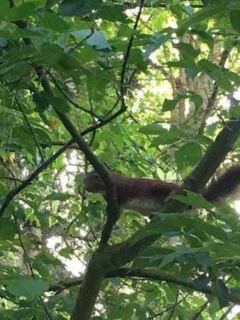 Saint-Loup-de-Naud, Francja: Petite visite dans le jardin de la chambre d'hôtes Maison Vérosia avec une très belle surprise, un jeune écureuil qui saute de branche en branche. Prise de la photo sur le vif.