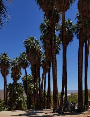 Coachella Valley, CA: Coachella canyon oasis