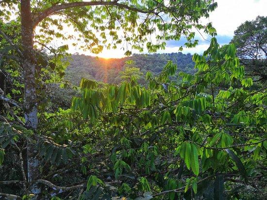 Canopy Guyana