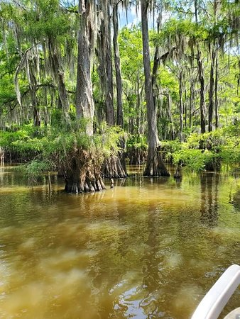 Caddo Lake State Park (Karnack) - 2019 Book in Destination - All You