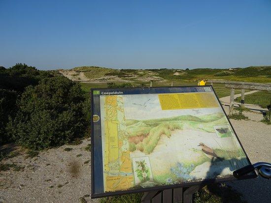 Natuurreservaat Coepelduynen