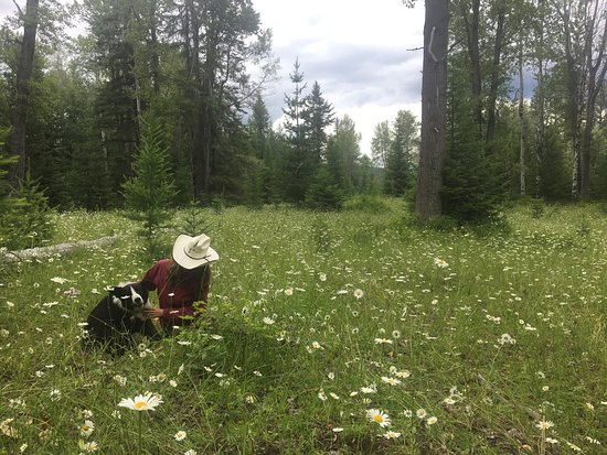 On another all day'r...with a cow dog in a meadow.  Bull Hill Ranch, Kettle Falls, WA