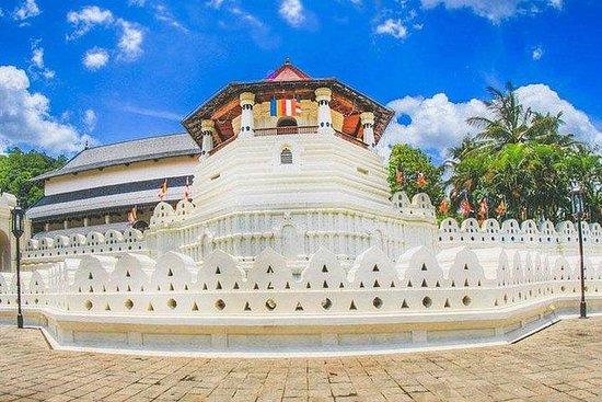 Sri Lanka Tour 06 netter 07 dager