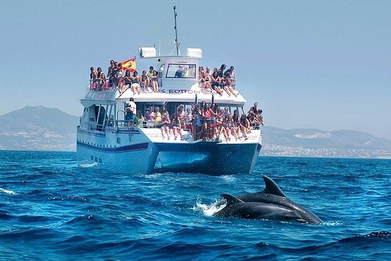 Viaje de delfines