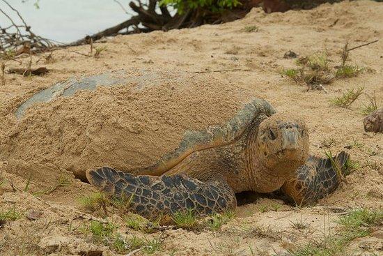Observation des tortues