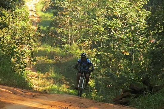 Giro nella giungla in mountain bike