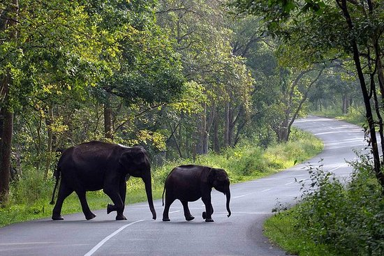 Kerala Family Explore 5 Days...