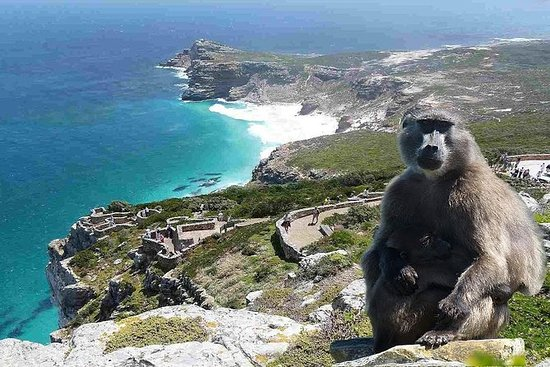 Cape of Good Hope & Penguins Tour i en...
