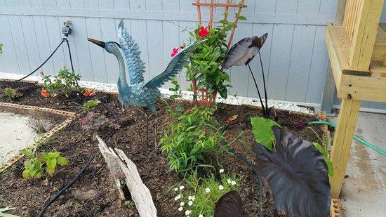 Blue Ball, Pensilvania: Blue Heron in flower bed