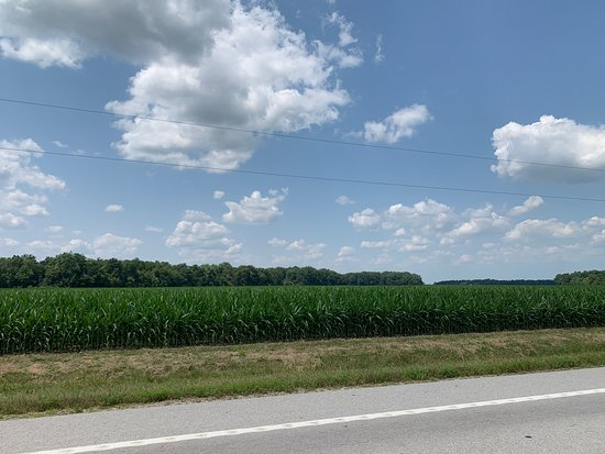 Bettsville, OH: Lots of farm land