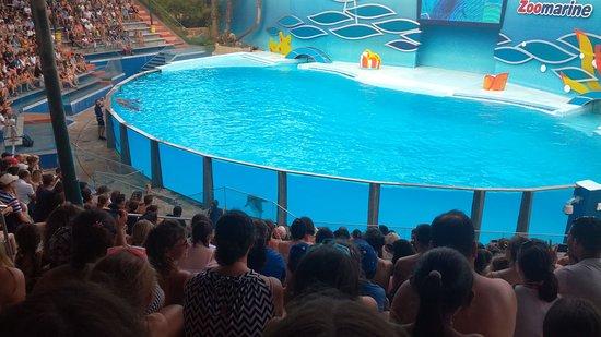 Гиа, Португалия: Spectacle dauphins