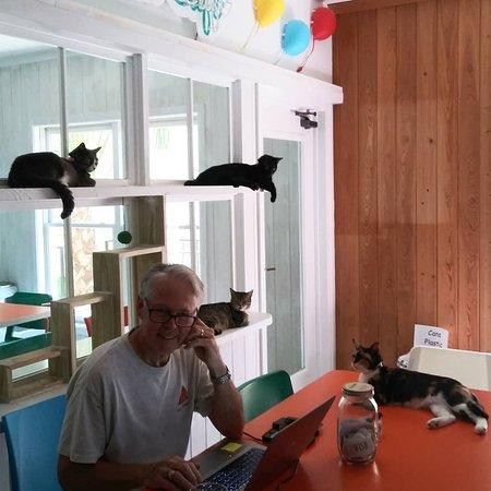 Purr & Pour Cat Cafe