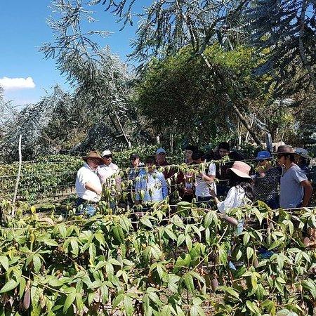 Cayambe, Équateur: Conoce nuestros cultivos y vive en persona un día en la Hacienda